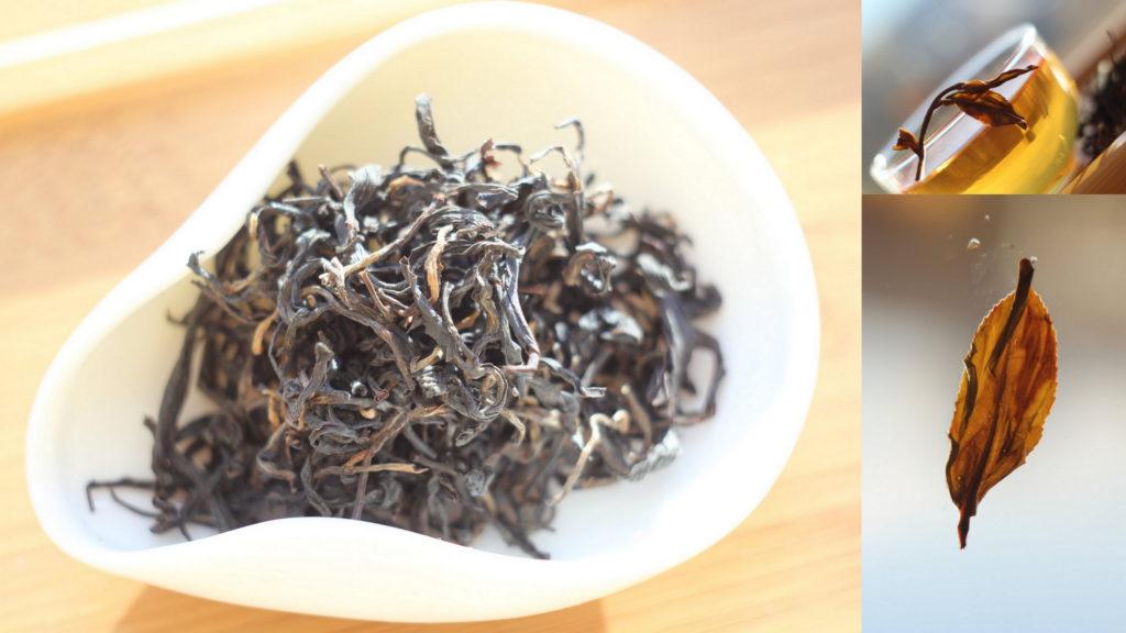 Чайное дерево на Тайване: разновидности и сорта. TTES#12, Золотой цветок.