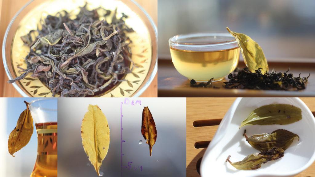 Чайное дерево на Тайване: разновидности и сорта. Камелия формозская.