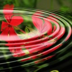 Relaxing image of geranium in a pond