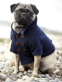 Dogs in clothes - Canine chic - goodtoknow