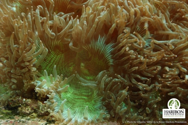 Coral World Park and developments like it threaten vulnerable species, according to Philippines' conservationists. Image: Haribon