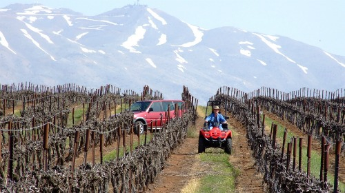 golan-heights-vineyard