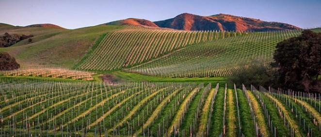 Peake-Ranch-Vineyard