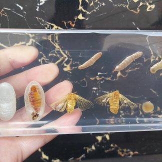 worm cycle in lucite