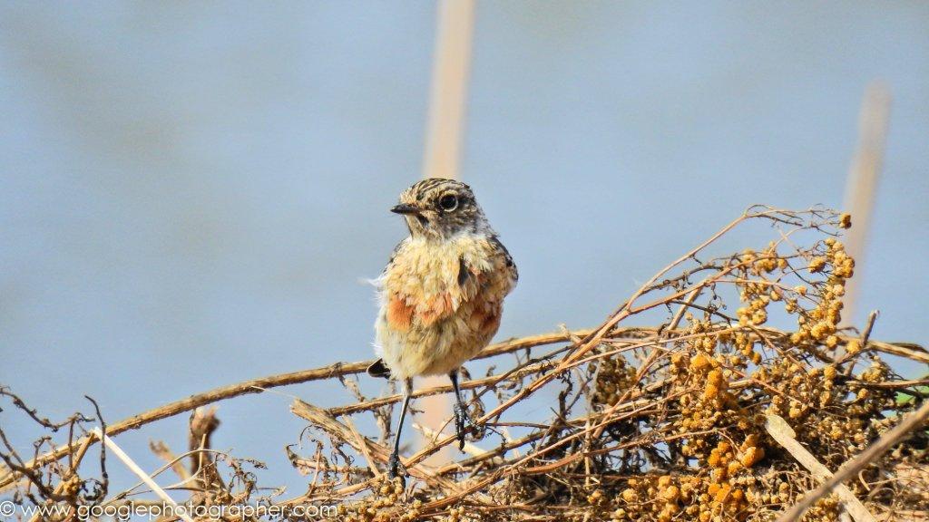 Bird Photographer | Charel Schreuder Photography