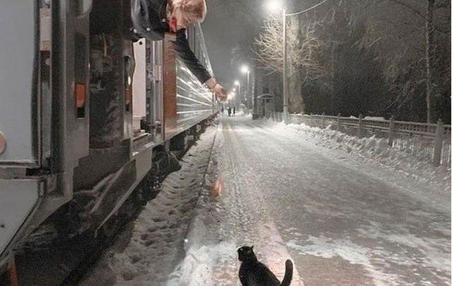 روزانہ رات 10:40 پر ریلوے ڈرائیور سے غذا کھانے والی بلی