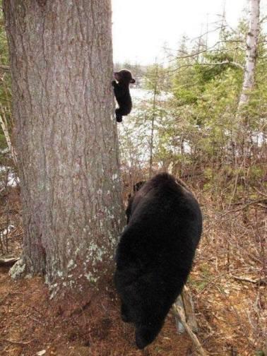 Climbing cub
