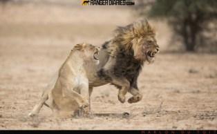 20.-kalahari-passion-marlon-du-toit-596x369