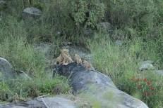 lion-den-site