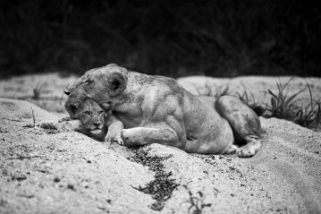 mother-and-cub