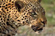 Okavango - Photo © 2013 WEXAS Travel