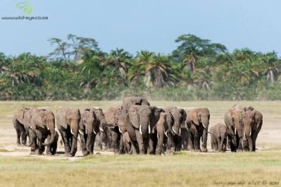 From the Blog - Photographing Elephants in Amboseli