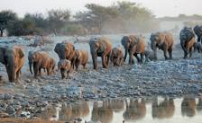 March of the elephants