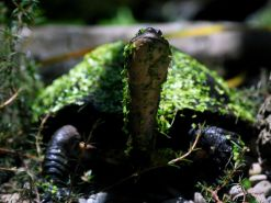 turtle-green-leaves_12669_990x742