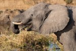 Water squirting elephant