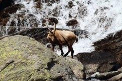 At a waterfall - Guido Muratore