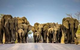 Fortunately while hitchhiking I never met up with this gang coming down the road!!