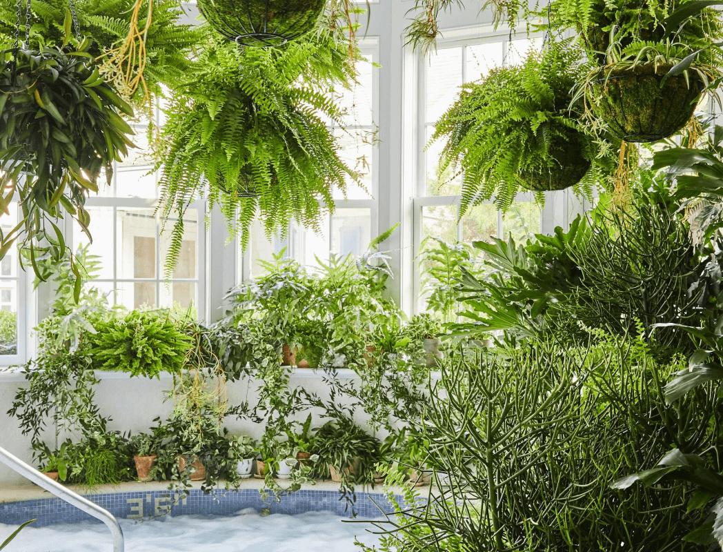 plants surrounding a hot tub