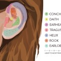 Ear piercing chart piercings and tattoos savannah ga pictures to pin