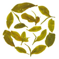 rare darjeeling green tea