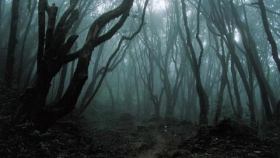 dark forest haunted