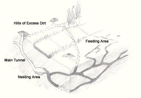 mole-tunnel-diagram