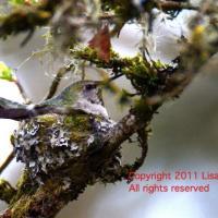 Spring shoots, bizarre fungi, welcoming birds
