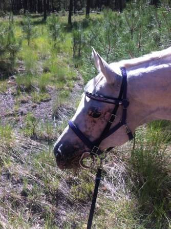 The gleaming eyes of a happy pony. Trail riding plus grass buffet = bliss.