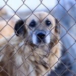 Adopt, Don't Shop! Saving the lives of shelter pets