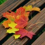 Fall fests dot the Carolinas' landscape