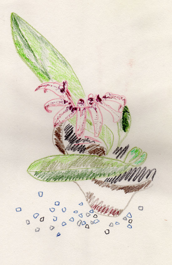 orchidroom