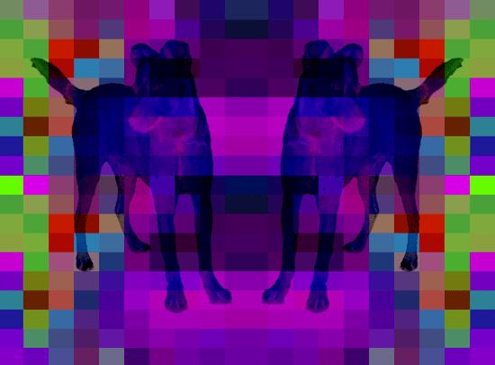 zipperdog2