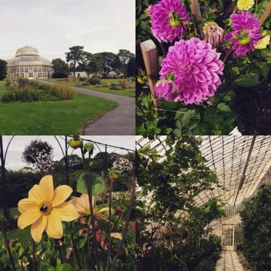 botanic gardens go radiate