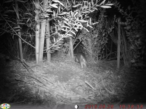 A mystery animal! Is it a bandicoot or something else?