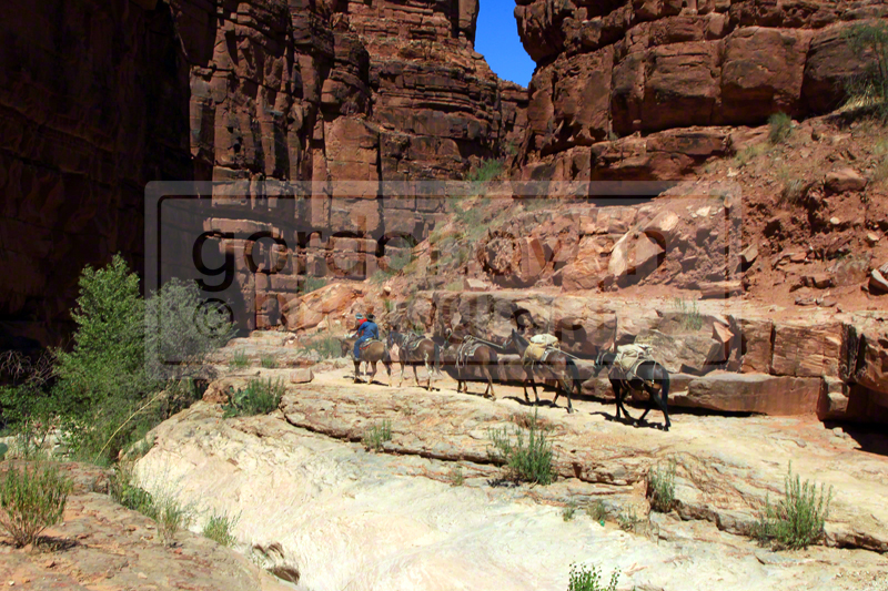 The trail carves through a narrow canyon as you make your way to the village. Please Carefully Listen for and Watch out for the mule pack trains that frequent the trail during tourist season and DO NOT wear headphones.