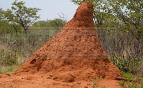 termite mounts