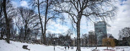 The snow covered trees and lawn near the Harlem Meer in Central Park on Friday Jan. 9, 2015. (Gordon Donovan/Yahoo News)