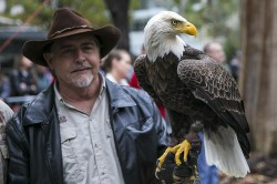 Challenger the Bald Eagle poses during a ceremony honoring veterans at Madison Square Park in New York City on Nov. 11, 2015. (Gordon Donovan)