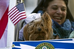 A dog wears a naval cap while riding a float during the Veterans Day parade on Fifth Avenue in New York on Nov. 11, 2016. (Gordon Donovan)