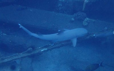 Diving with Sharks ~ Part 1