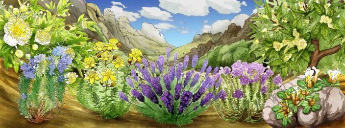 Mediterranean native herb vista for RGB KEW Gardens.