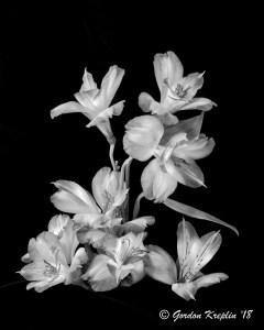 """""""Flowerinas"""" copyright Gordon Kreplin 2018"""