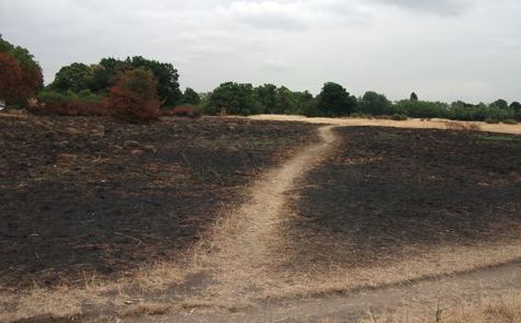 Scorched areas on the common