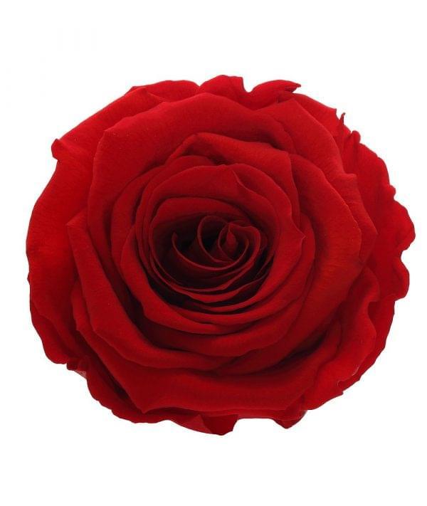 Red roses order online, best quality roses online,