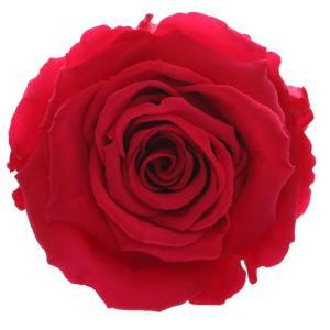 forever roses order online