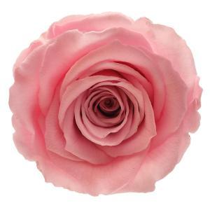 Dry flowers order online, buy dry flowers,