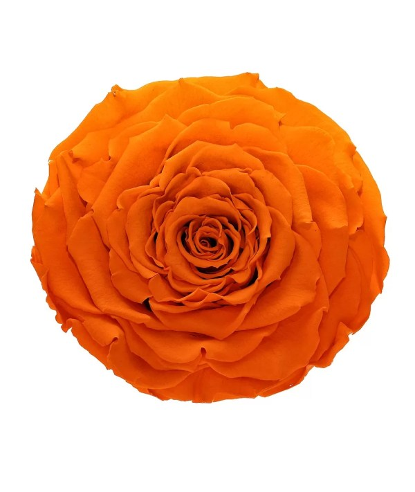 Most popular color of roses