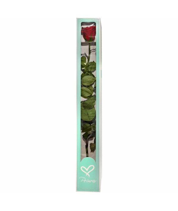 Valintines day roses buy online