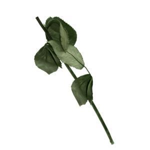 Stem for preserved roses