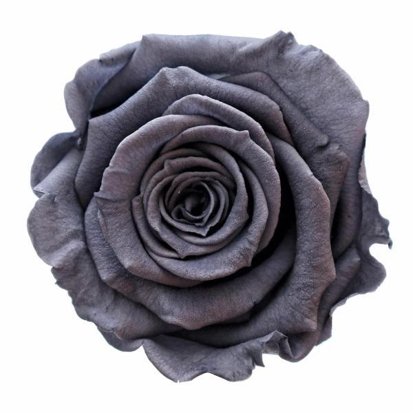 Grey roses buy online